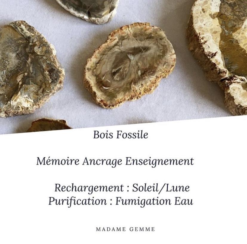 Retrouvez nos bois fossiles sur le catalogue de Madame Gemme