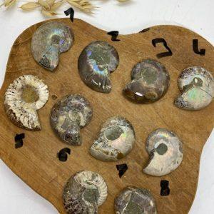 Ammonite en tranche à choisir sur photo